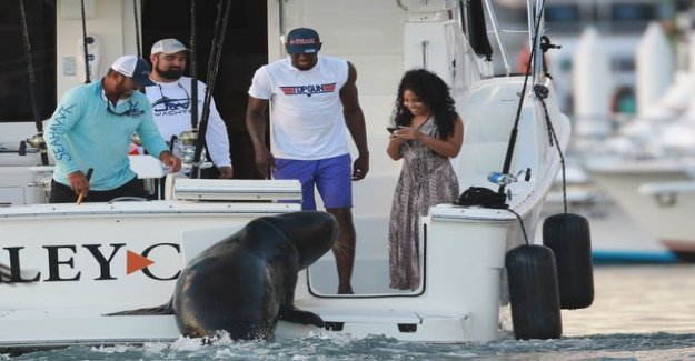In this guise Usain Bolt has not been previously described - was inspired by to feed the seals