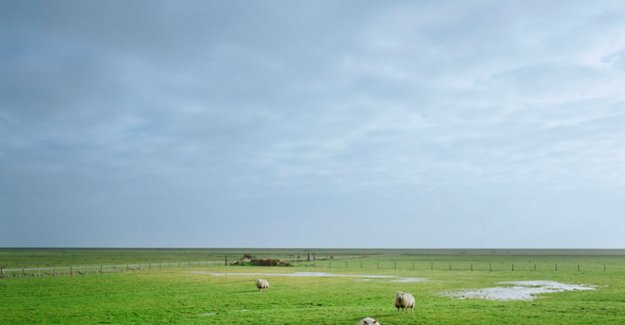Natuurpunt warns: a day disappears, the 6 acres of open space in Flanders
