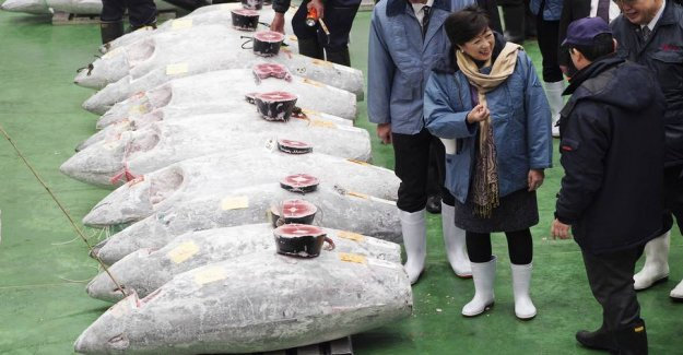 Paid 20 million for fish: - Maybe I let myself get carried away