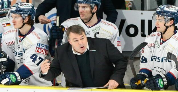 Polar bears in crisis : The sports Director must relieve the Trainer