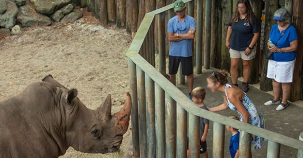 Rhinos will not be punished after peutertje in their stay at the zoo in Florida fell