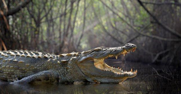 Scientist eaten alive by crocodile