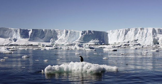Scientists beating the alarm: Ice in Antarctica is melting much faster than thought