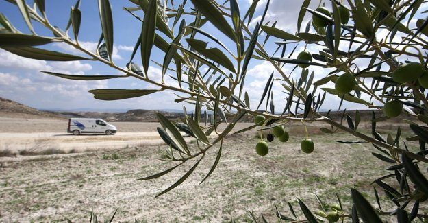 Spanish olives will be legal proceedings between the EU and the united states
