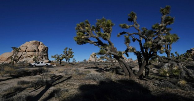 U.S. national parks get out of control