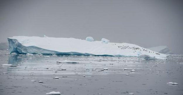 US-study: Antarctic ice is melting ever faster
