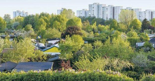 Urban ecology : More gardens, more pollinators