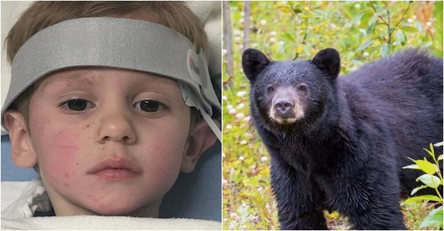 Was lost in the woods for several days – was taken care of by the bear