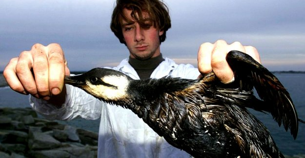 20 000 dead seabirds coils along the Dutch coast: link with lost containers?