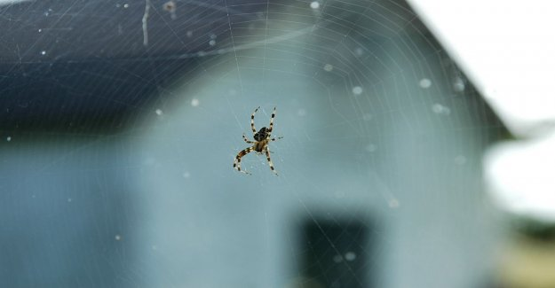 5 simple tips to get rid of spiders