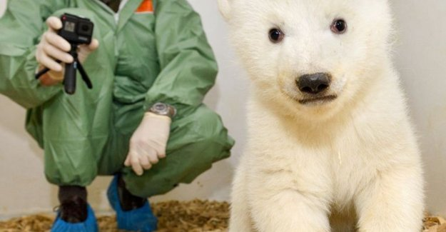 A week good news: eleven weeks old ijsbeertje shows in Berlin zoo and other stories that make you happy