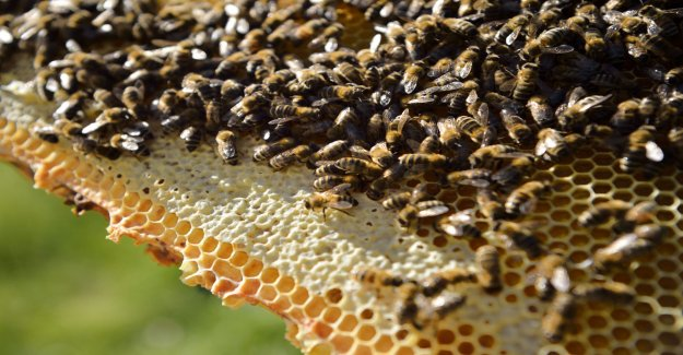 Bees can learn the plus and minus