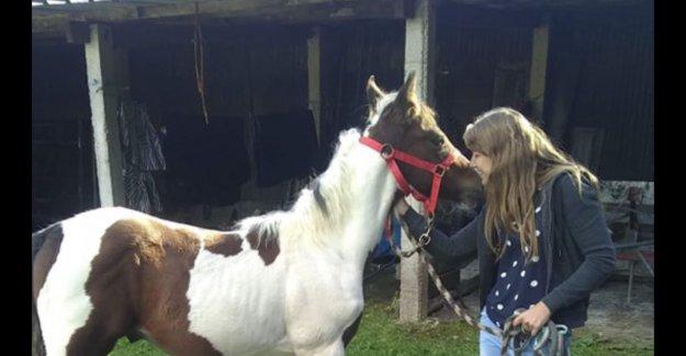 Bizarre: Yentl (23) see own foal sale for € 1,000