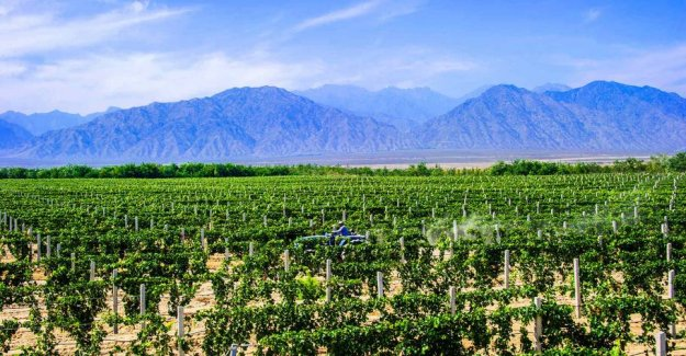China's wine production drops by 40 percent