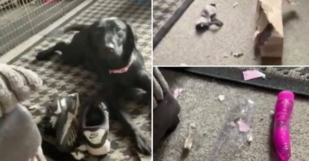 Embarrassing! Dog opens the neighbor's very private package