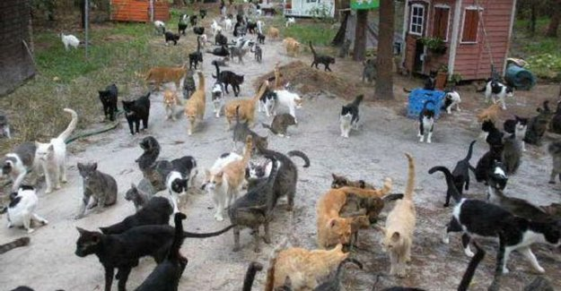 In this Turkish village to listen the cats to Mozart and Beethoven