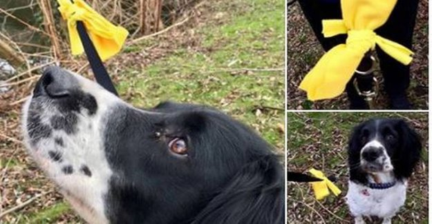 It should you do if you meet a dog who wear a yellow bow