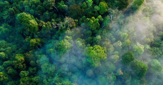 Massive global afforestation can decade CO2 emissions neutralize