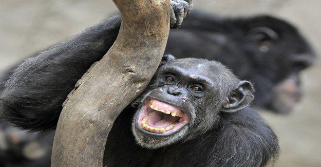 Monkeys got hurt in the stomach by Rasmus Seebach
