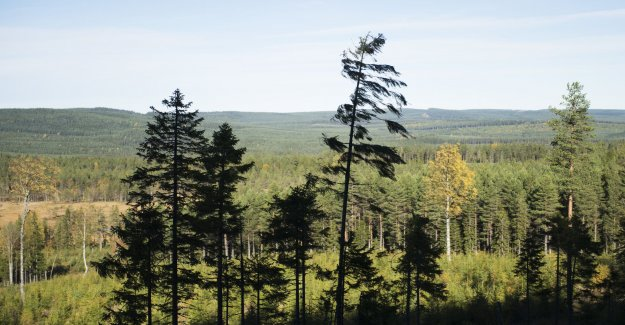 Organizations require more protection for the forest