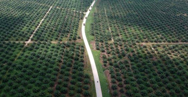 Palm oil companies refuse compensation payment