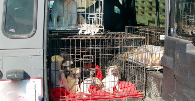 Police falls within at fokker in Lochristi: 23 animals seized