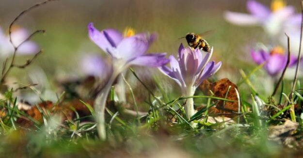 Popular initiative in Bavaria : The feeling of bee