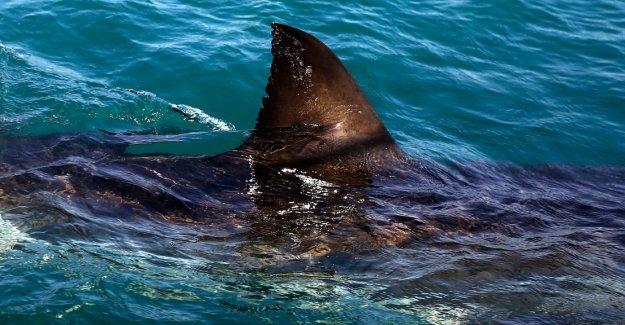 Surfer bitten in the leg by a shark in Australia