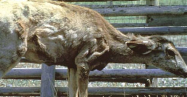 The Zombie-deer spreads to more states