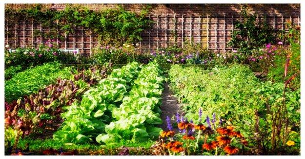 The gardener's best tips for vegetable garden