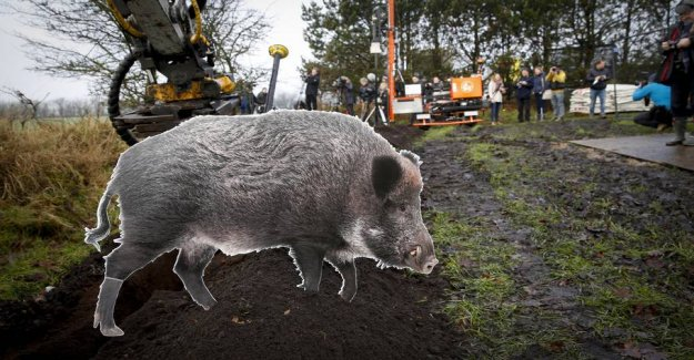 The pig industry, both: Vildsvinehegn will have no effect