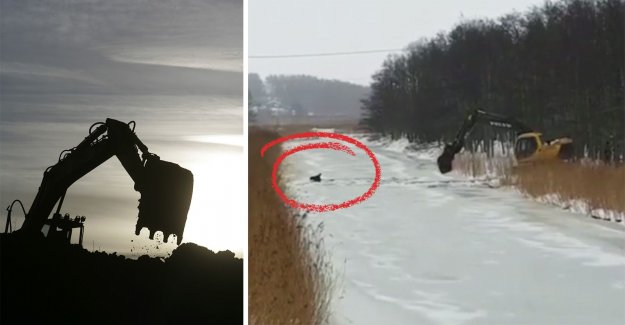 This saved the moose – with the excavator
