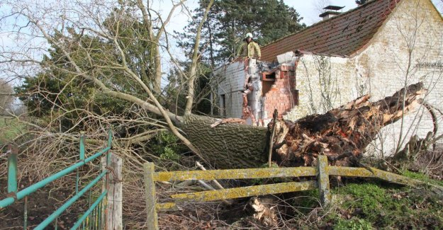 Towering poplar tree falls on house by squall
