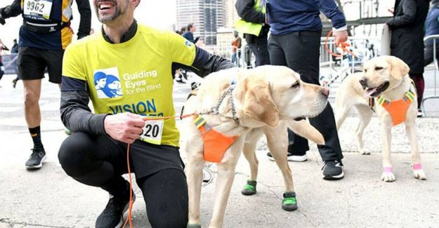 A week good news: blind man runs half-marathon with three guide dogs and other stories that make you happy