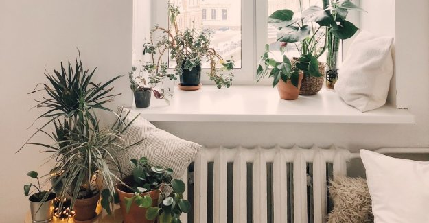 Absolutely no green thumb? This binnenhuisplanten do you like to do in life