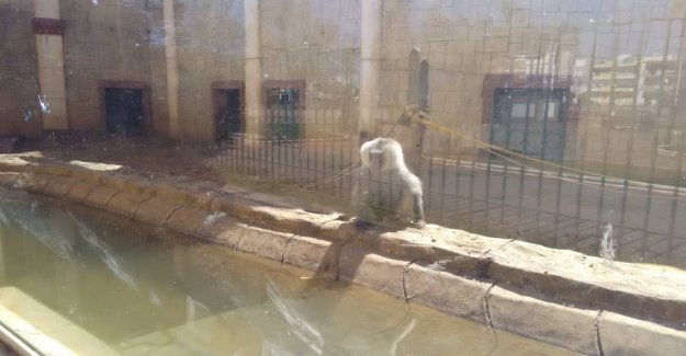 Accusation: Animals left to die in the abandoned zoo