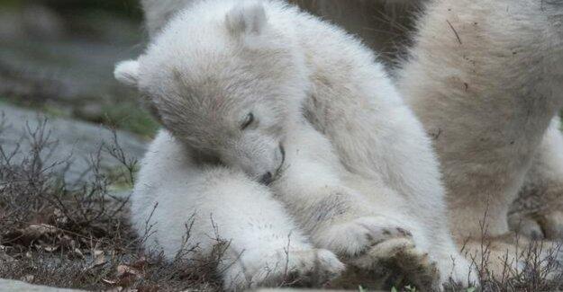 Animal Park in Berlin : The little polar bear gets a name