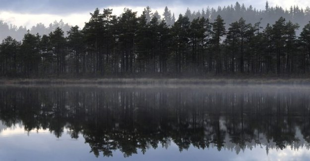 DN Opinion. The forest is better at storing carbon dioxide than norwegians