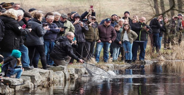 Great interest for laxfiskepremiären in Mörrum