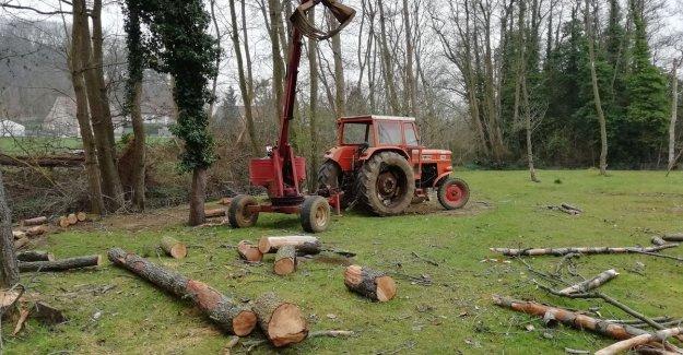 Hobbyist crashed at work on dream garden for his grandchildren. He was just retired