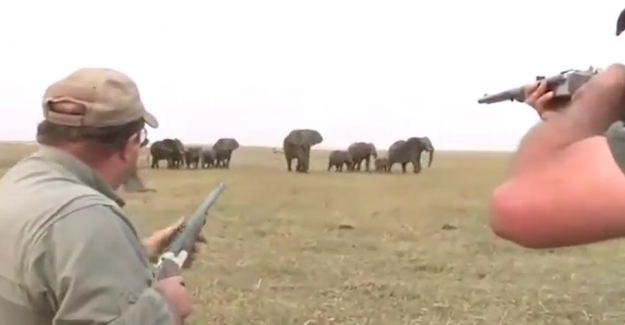 Hunters kill the he-elephant: So goes the flock amok