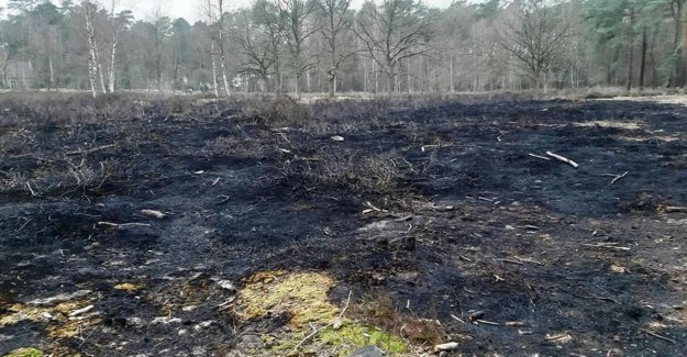Natuurpunt are going to find arsonist(s) that ten acres of heath in the as explained