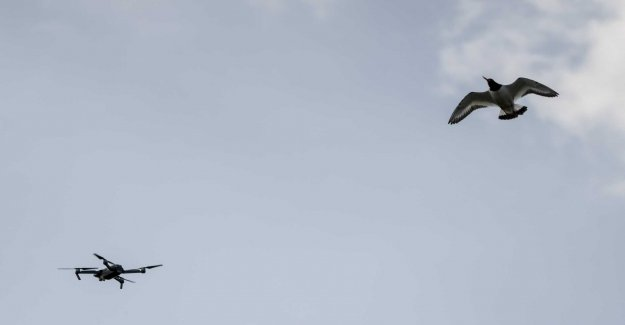 Researchers: Drones are good tools for the census of birds