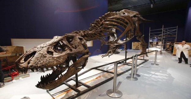 Researchers states: Rexarnas rex found