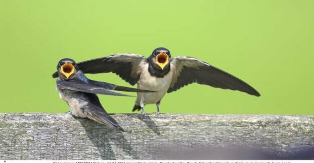 Significant decline in Europe : an insect-eating extinct birds