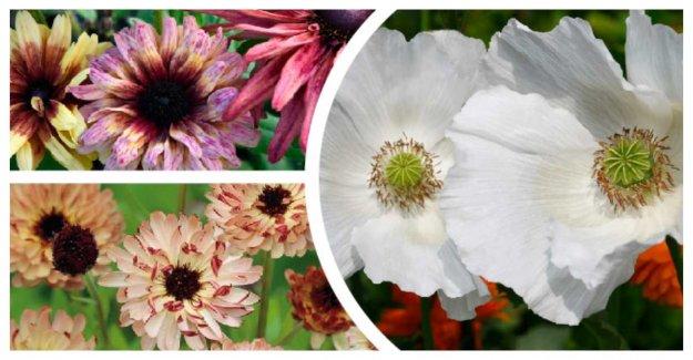 So summer flowers – 10 beautiful frönyheter