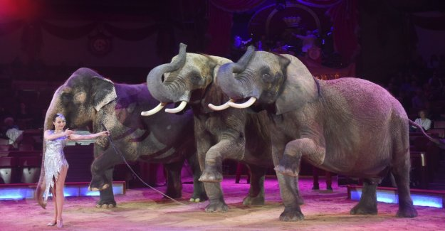 The Circus Krone building old-age home for elephants