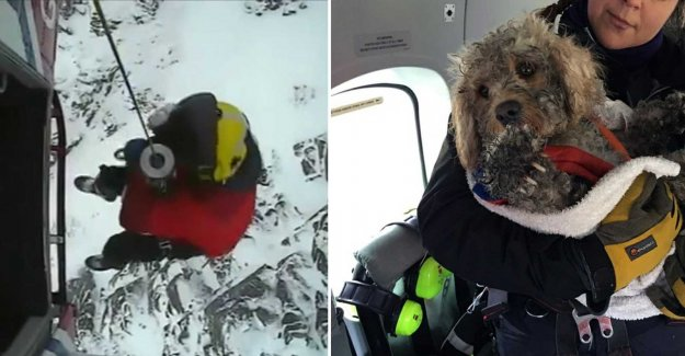 The dog Bone disappeared in the blizzard – were rescued by helicopter