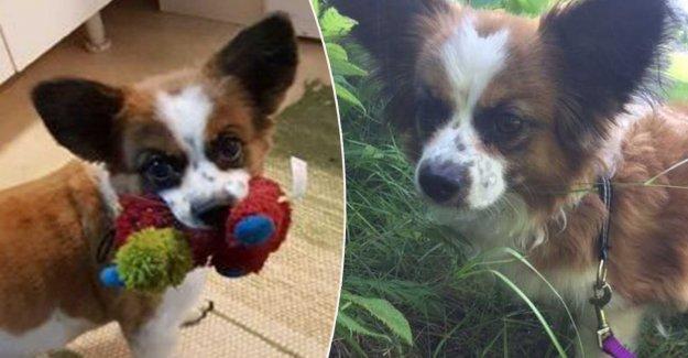The dog Molly vanvårdades – now she has a new home