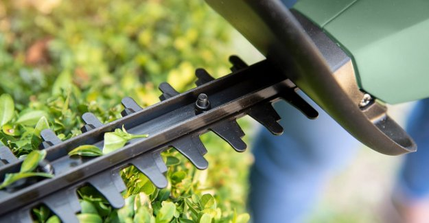 There is the spring: these are the best hedge trimmers